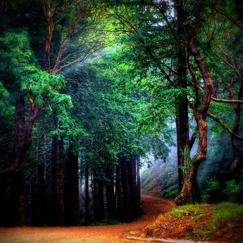Mystical Forest, Mill Valley, California