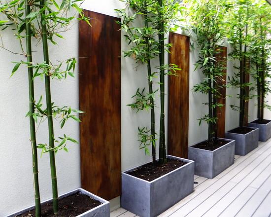Bamboo Rust (Perth)