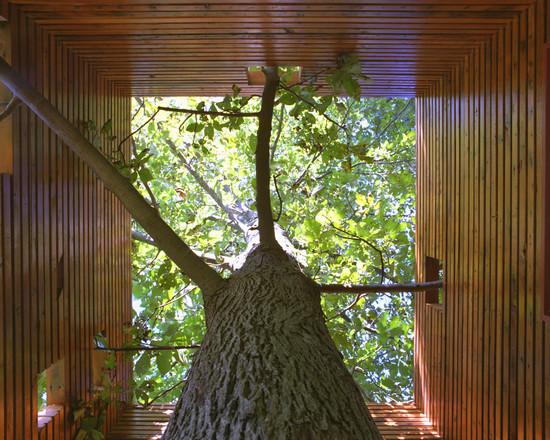 A House For A Tree (Kansas City)